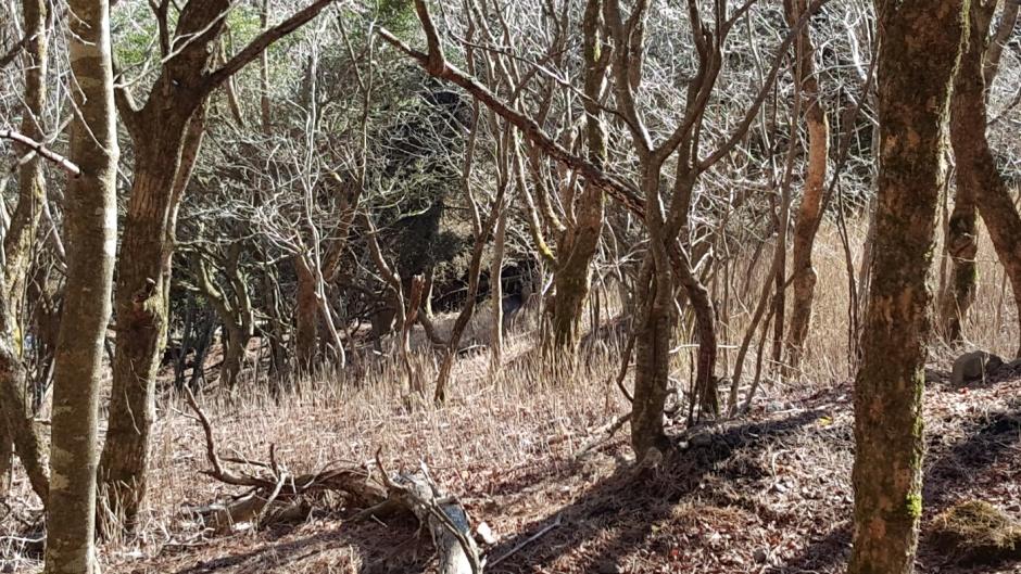Deer hidden