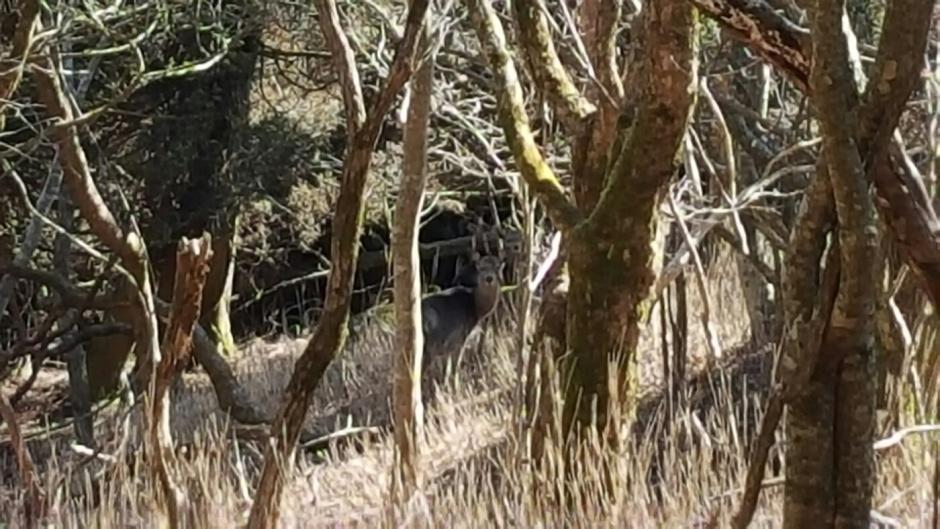 Deer reveal