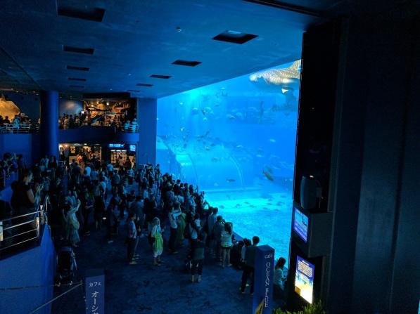 The highlight of the aquarium